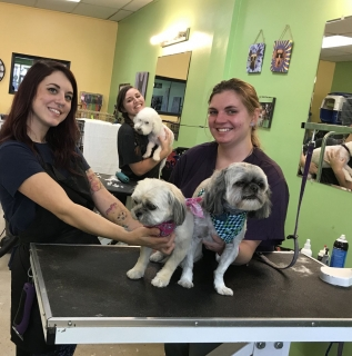 School of Dog Grooming